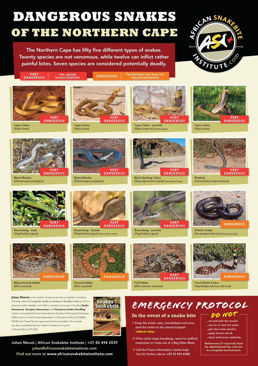 Dangerous Snakes of the Northern Cape