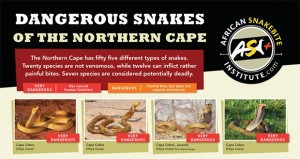 Dangerous Snakes of the Northern Cape and Kimberley