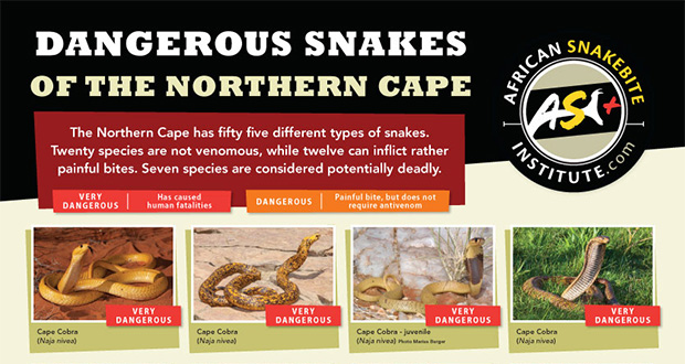 Snakes Of Kimberley And The Northern Cape Kimberley City