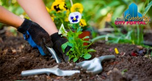 Gardening and Gardens in Kimberley Northern Cape