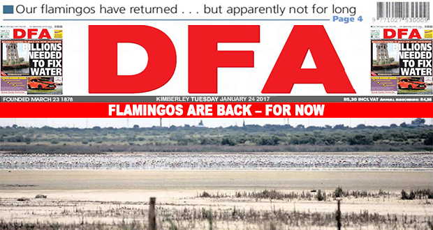 Flamingos are back - for now