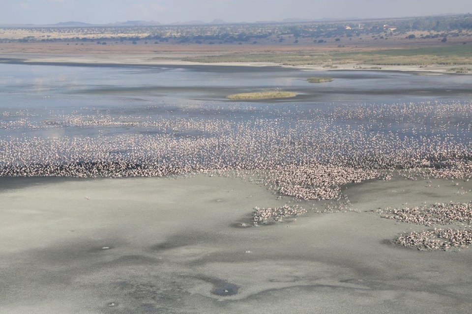 Flamingos At Kamfers Dam Kimberley