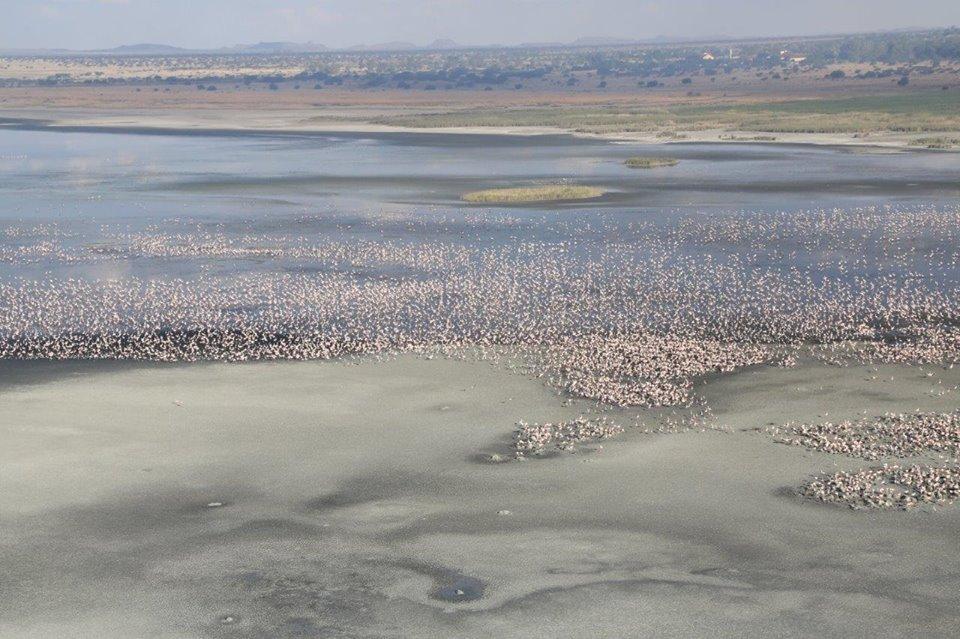 Flamingos At Kamfers Dam Kimberley